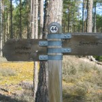 Culbin Forest